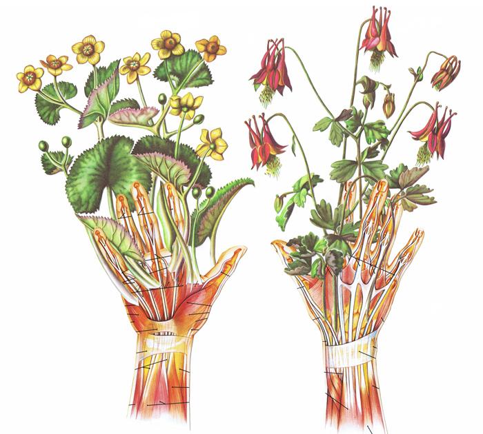 marie-conigliaro-hands
