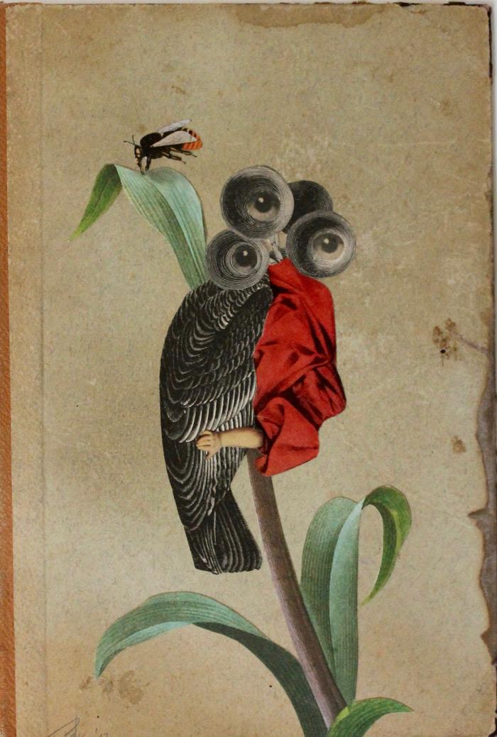 sherry-parker-grandiflora