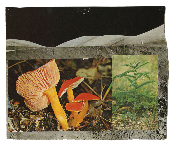 Studies for possible futures, Vision #6: Lunar Forage by Maggie Groat