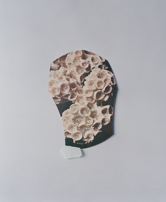 celia-perrin-sidarous-coral-and-sea-glass