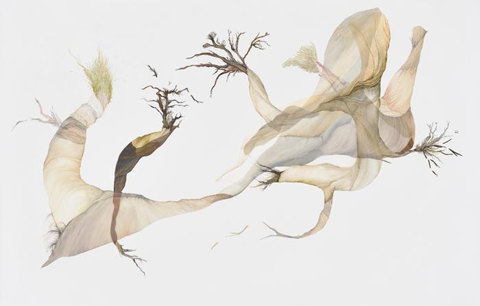 lisa-mccutcheon-pruning-day-series-2
